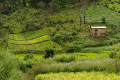 20161013-IMG_1863 (Konrad K. M.) Tags: myanmar kalaw shan