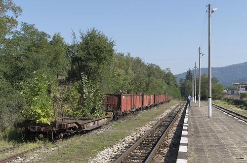 Overgrown wagons at the Kostandovo narrow gauge railway station, 16.09.2015.