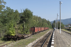 Overgrown wagons at the Kostandovo narrow gauge railway station, 16.09.2015.
