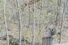 _DSC4319 (purin_cess) Tags: centralpark 2016 autumn 11月 十一月 秋 中央公園 紐約 ny newyork
