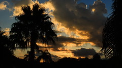 July 24, 2014 sunrise. (Jim Mullhaupt) Tags: morning blue sky orange storm color tree weather silhouette yellow clouds sunrise landscape dawn nikon flickr florida palm coolpix bradenton p510 mullhaupt jimmullhaupt