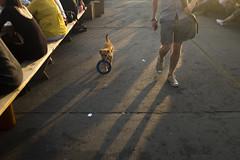 (ponyintheair) Tags: uk dog sun london golden august thursdayevening ring hour doggie peckham franks