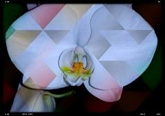 Bunt  - multicolored (eagle1effi) Tags: orchid darkness nightshot artistic framed samsung smartphone galaxy nightshots s5 orchideen effinger nighteffects eagle1effi effiart effiarteagle1effi samsunggalaxys5 galaxys5 samsungsmg900f galaxys5bestof galaxydevine