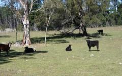31 Kain rd, Braidwood NSW