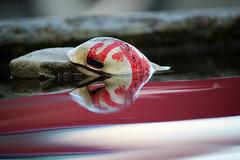 What's going on? (Rolf-Schweizer) Tags: life light red art landscape photography licht flickr peace fotografie romance fresh getty keystone landschaft leben gettyimages epa farben nowar romantik photographyart gettyimage artphotography einfach landscapephotography imlookingforanewjob ringexcellence rolfschweizer rolfschweizerphotography rolfschweizerfotografie rolfschweizerstgallertagblatt imneedajob ichsucheeinenjob