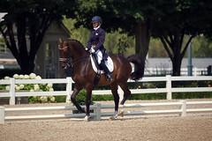 Lamplight's beautiful light. (Tackshots) Tags: sunlight wayne lamplight equestrian dressage