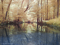 Lighted Stream (yeahbouyee) Tags: trees water stream infrared unanimous thechallengefactory