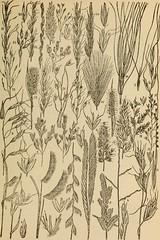 Anglų lietuvių žodynas. Žodis squirreltail grass reiškia squirreltail žolės lietuviškai.