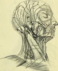 Anglų lietuvių žodynas. Žodis axillary artery reiškia pažasties arteriją lietuviškai.