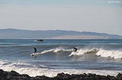 Pacific Surf (zeesstof) Tags: ocean california surf pacificocean swell centralcaliforniacoast geologyfieldtrip fieldexcursion zeesstof