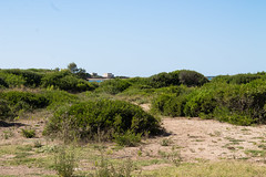 Brindisi - Punta Serrone (Clap_93) Tags: sea summer sky italy tower beach grass sand italia ground punta bushes puglia brindisi serrone