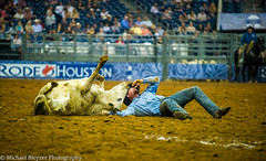 Are we done? (mbfirefly) Tags: cowboys texas houston chase rodeo steers houstonrodeo steerwrestling rodeo2012 reapjeans