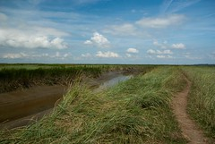 (KirstenDeLaet) Tags: summer nature water birds clouds landscapes vogels natuur wolken zomer land handheld gras juli van zon 2014 landschappen natuurgebied saeftinghe pentaxk10d sigma1770mmf284 ©kirstendelaet