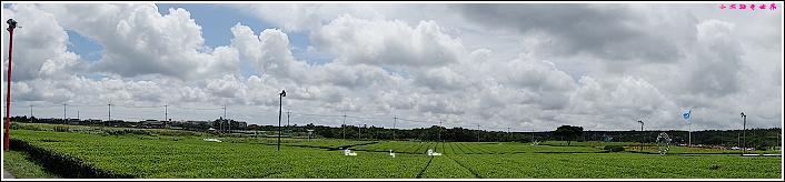 濟州島innisfree館 綠茶博物館 (62).JPG
