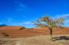 Dry salt pans in Sossusvlei, Namibia (jbdodane) Tags: africa day622 desert dunes namibnaukluft namibnaukluftpark namibia sand sanddunes sesriem sossusvlei tree freewheelycom jbcyclingafrica