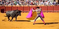 DSC00713-2 (jafleming3) Tags: sevilla bullfight spain travelphotography 2014