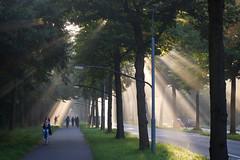 Aangeraakt (zsnajorrah) Tags: shadow people urban haarlem netherlands candid ef50mmf14 explore transportation goldenhour crepuscularrays haarlemmerhout spanjaardslaan eos600d
