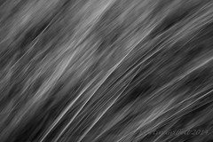 Grass (4orty7even) Tags: summer plant abstract black blur detail nature grass lines outside grey mono countryside blackwhite movement pattern stripes country icm flowersplants img201409029405