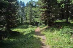 In mezzo al bosco
