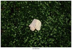En el bosque (d a v i dk a i s e r) Tags: hojas leaf floor australia melbourne leafs davidkaiser leafinthewater hojaenelpiso hojaenelagua