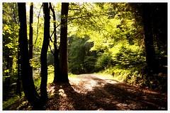 wood (gurou45) Tags: road wood autumn light summer sun nature trekking germany landscape licht europa europe time outdoor sommer natur grün landschaft sonne wald canoneos50d