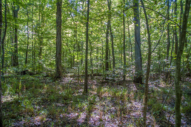 Chelsea Flatwoods Nature Preserve - Sept. 7, 2014