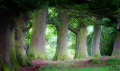 Fit For Fairies (Iain Mak) Tags: wood trees tree green oak focus yorkshire north fairy rook oaks eight mystic rookery pickering thesecretlifeoftrees rookers
