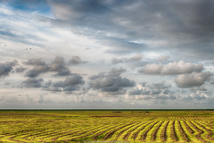 gemaaid (mowed).jpg (robvanderwaal) Tags: sky cloud netherlands dutch grass lines clouds skyscape landscape nederland wolken gras lucht dijk polder dike landschap lauwersmeer lijnen wolk 2014 mowed gemaaid bantpolder rvdwaal robvanderwaalphotographycom