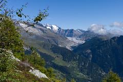 Aletscharena® (Toni_V) Tags: mountains alps nature landscape schweiz switzerland europe suisse hiking rangefinder unesco alpen svizzera wallis valais worldheritage wanderung m9 2014 welterbe bergwelt svizra myswitzerland summiluxm aletschglacier grosseraletschgletscher 50lux ©toniv leicam9 140913 50mmf14asph aletscharena blattenbelalpfoggenhornbrig l1018691