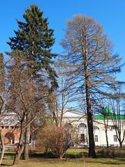 P4170056 (Helgi Hvitabjorn) Tags: helgihvitabjorn olympus sky plants