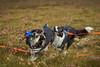 28august_Hringur&Venus_lastPlay_130 (Stefán H. Kristinsson) Tags: hringur venus august 2016 play leikur last reykjanes patterson iceland ísland