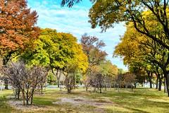 Autumn Serenade (Lojones13) Tags: outdoor foliage tree autumn park bronx newyork serene fall serenade