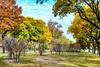 Autumn Serenade (Lojones13) Tags: outdoor foliage tree autumn park bronx newyork serene fall serenade