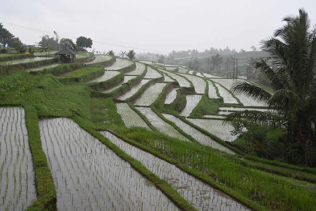 The World S Best Photos Of Bali And Risaie Flickr Hive Mind