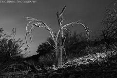 Wishbone Tree (Eric Binns Photography) Tags: desert sonorandesert tontonationalforest landscape sky outdoors tree strobist pocketwizard offcameralighting arizona blackandwhite deadtree