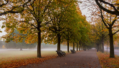Misty Autumn Colours (L0nglost) Tags: misty autumn colours bench greenwich park leaves trees fog track fall morning photo walk nikon d800 185mm lee neutral density filter long exposure royal parks brilliant wow