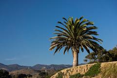 43-365v3 A Californian Landscape.jpg (Mark Seton) Tags: us santabarbara palmtree bacara unitedstates drought america golita landscape