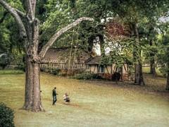 Fall Swing (clarkcg photography) Tags: swing ropeswing tree bigtree swinghigh hill open tulsa oklahoma brushcreek