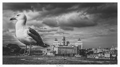 Seagull (Photo Holica) Tags: bw fororomano rom seagull za architecture nature variotessartfe41635 sony 7m2 alpha