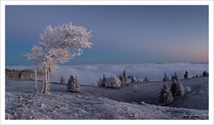 Ambiance glaciale... (Joce.V) Tags: creuxduvan suisse ambiance hiver froid givre arbres matin canon 5dmarkii 2470 paysage landscape