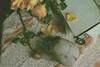 * (M.B.*) Tags: wolfskurai canon photography stilllife vanitas roses death love languageofflowers skull