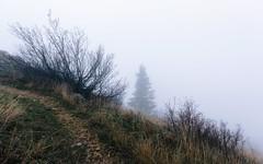 Fogged In (John Westrock) Tags: garfield washington unitedstates us fog foggy steptoebutte hill tree nature pacificnorthwest canoneos5dmarkiii canonef1635mmf4lis