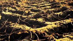 The Dunes of Worth County (TuthFaree) Tags: elements dunes peanuts tractortire impression ga swga georgia artistic digitalart topaz hss slidersunday