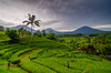 Jatiluwih Green Land [EXPLORED] (hendri.arba) Tags: paddy green nature landscape cpl marumi bali