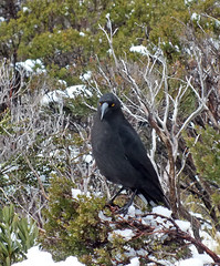 Baleful glare (LeelooDallas) Tags: australia tasmania cradle mountain landscape dana iwachow fuji finepix hs20 exr dove lake water cloud sky tree forest