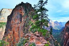 Angels Landing, Zion National Park, Utah (Maria Kotsonia) Tags: utah usa sandstone angelslanding zionnationalpark trail hike adventure terrifying challenge nikon nikkor d3300 nikond3300 cliffs sky