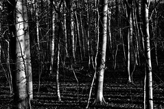 16-381 (lechecce) Tags: 2016 nature blackandwhite netartii artdigital sharingart awardtree shockofthenew trolled