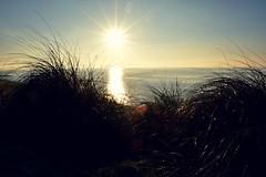 Through the reeds (beachaddictphotography) Tags: beach barton dorset morning sunrise winter sun flare sea shore coast stones rocks sand waves calm tranquil serenity