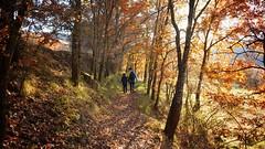 Walking... (JESÚS PUIGMARTÍ) Tags: catalunya catalonia lleida tremp laterreta forest foret oak tree light walk colors fall automne autumn outono pirineus pirineos pyrénées