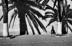 Alone under palm trees (Georgie Pauwels) Tags: street olympus palmtree tree shadows wall candid morocco walking streetphotography blackandwhite